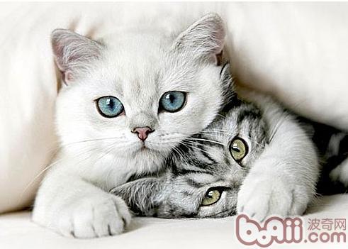 无限火力猫咪出什么图片