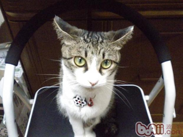 影响猫咪乱排泄的四个心理因素