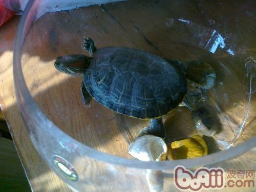 龟繁殖.jpg