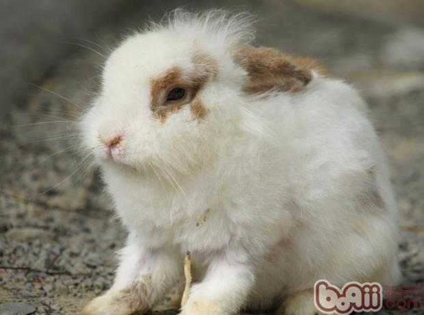 兔子生病有哪些症状表现