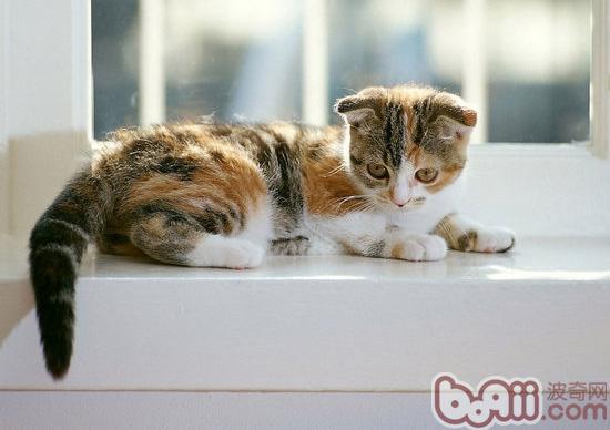 关于猫咪葡萄膜炎的原因及治疗
