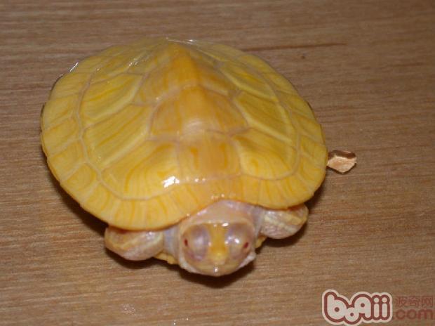 龟龟需要的营养元素