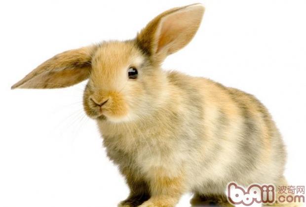 兔子吃什么食物长得快-轻博客