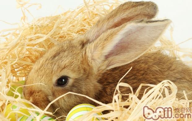 哪些食物是兔子不能吃的?-轻博客