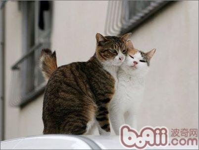 如何处理怀孕妈妈和猫咪的关系