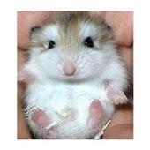 仓鼠的发育成长过程-轻博客