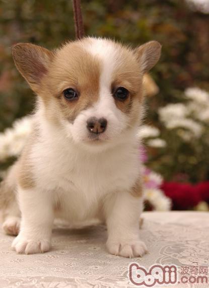 家庭养犬三大注意事项