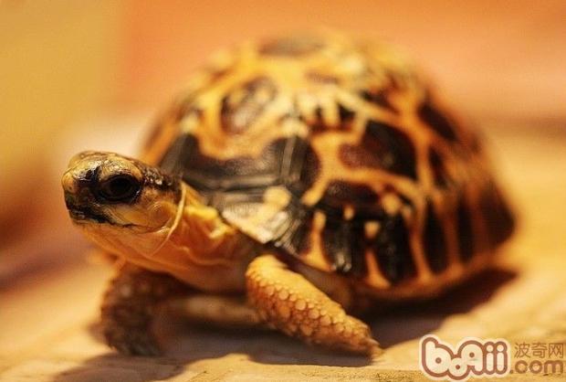 龟龟为什么会眼睛肿胀-轻博客