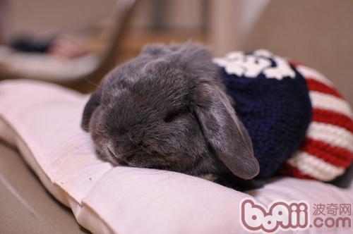 人工帮兔兔交配的方法-轻博客