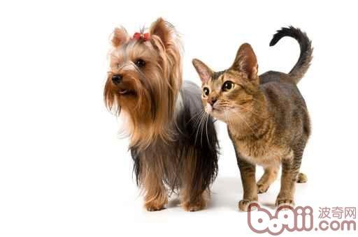 四个办法让犬猫远离寄生虫