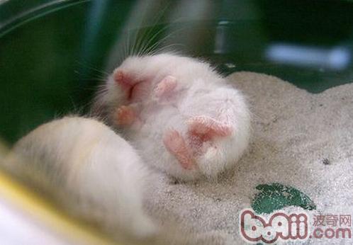 仓鼠的低体温症-轻博客