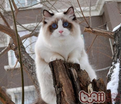 測試貓咪對你的信任度有多少