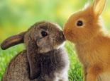 兔子为什么会拉稀?