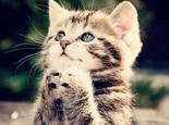 几个小办法教你治疗猫咪的抑郁症