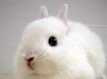 兔兔吃粮呛到气管抢救方法