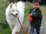 外出散步如何给狗狗系牵引带