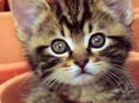 如何给幼猫补充营养