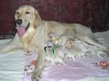引起母犬产后低血钙症的病因及症状