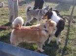 狗和狗相遇主人需要注意什么