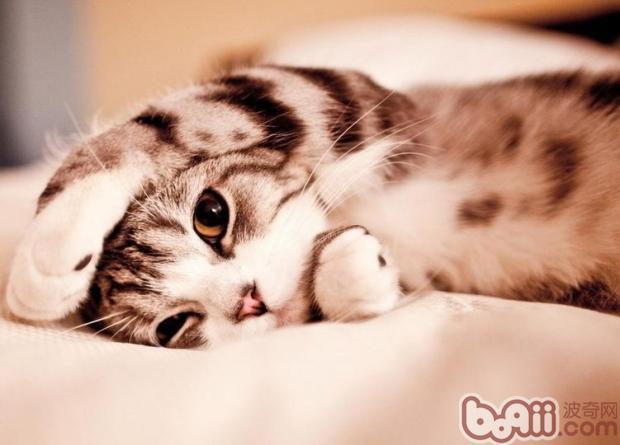 唯美猫咪图片大全可爱