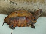 水龟常见病与治疗方法分享