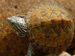 饲养陆龟的环境设备