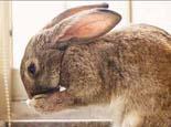 兔子其实能听懂人类的语言