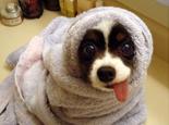 狗狗冬季美容需要注意的事