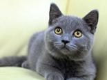 幾個辦法減少貓對家里的破壞