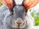 通过游戏在兔子心中树立地位
