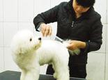 北美工作犬会美容师是如何进行认证的