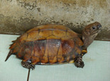 【分享】龟缸生态循环过滤系统的搭建