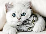 猫咪无限火力出什么装备图片