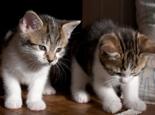 猫咪犯错后应该怎么调教