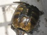 了解龟类冬季加温饲养装备