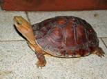 各种龟窝的布置图分享(图)