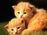 如何让猫咪不再胆小更有自信