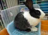 训练兔子用厕所