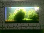 谈谈壁挂鱼缸的优缺点及造景