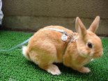 指甲判斷兔子年齡&計算兔兔年齡