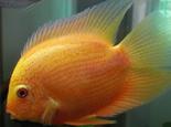 治疗观赏鱼白点病的办法
