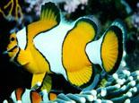 十点原则养深水鱼不再困难