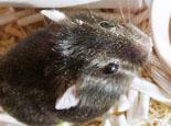 仓鼠感冒了怎么办?