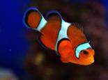 热带鱼的常见病及如何预防热带鱼生病