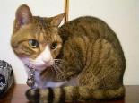 护理猫猫毛皮的方法及好处