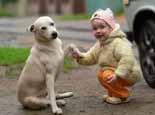 狗狗训练 、惩罚也要有讲究