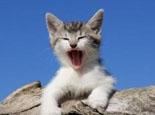 猫叫声了解猫咪心情好坏