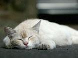 猫瘟可怕但不会传染给人类