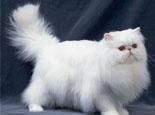 猫咪尾巴也需要定期清洁