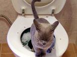让猫咪也轻松学会蹲马桶